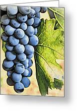 Grapes 2 Greeting Card