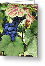 Grapes 3 Greeting Card