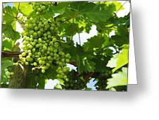 Grapes In A Vineyard Greeting Card