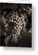 Grapes In Grey 2 Greeting Card