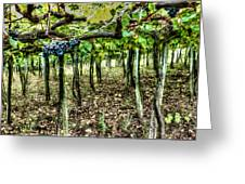 Grapes On A Vineyard Greeting Card