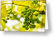 Grapes On The Vine - Finger Lakes Vineyard Greeting Card