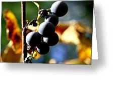 Grapes On The Vine In Square  Greeting Card by Neal Eslinger