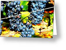 Grapes On The Vine Greeting Card by Kay Gilley