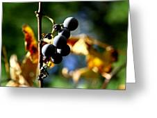 Grapes On The Vine No.2 Greeting Card