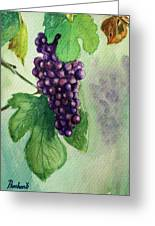 Grapes On The Vine Greeting Card by Prashant Shah