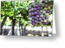Grapes On Vine 2 Greeting Card
