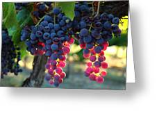 Grapes With Bokeh Greeting Card