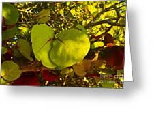 Grapetree Canopy Greeting Card