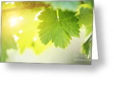 Grapevine Leaves Greeting Card