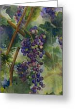 Baby Cabernets II   Triptych Greeting Card