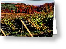 Grapevines In Vineyard, Traverse City Greeting Card