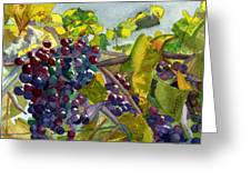 Grapevines Greeting Card