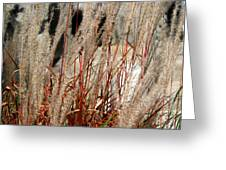Grass Abstract Greeting Card