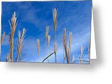Grass Against A Blue Sky Greeting Card