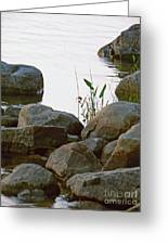 Grass And Rocks Greeting Card