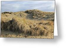 Grass And Sand Dunes Greeting Card