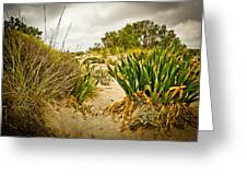 Grass And Sand Of Elafonisi Greeting Card