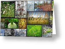 Grass Collage Variety Greeting Card