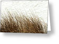 Grass Down By The Shore Of Virginia Beach Greeting Card