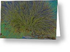 Grass Effects-2 Greeting Card