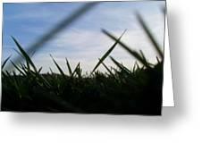 Grass-eye-view Greeting Card by Kiara Reynolds