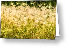 Grass Feathers Greeting Card