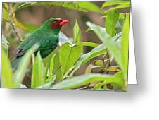 Grass-green Tanager Greeting Card
