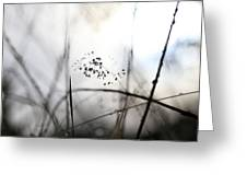 Grass Heavy With Raindrops Greeting Card