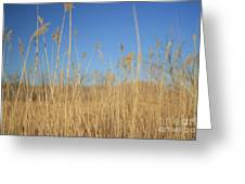 Grass In Motion Greeting Card