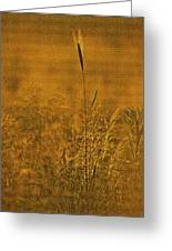 Grass In The Light Of The Rising Sun Greeting Card