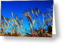 Grass In The Wind Greeting Card