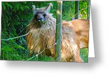 Grass Is Always Greener - Llama Greeting Card by Jordan Blackstone