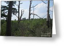 Grass Marshlands Greeting Card