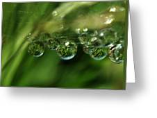 Grass Morning Dew Greeting Card