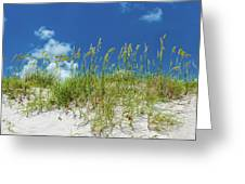 Grass On The Beach, Bill Baggs Cape Greeting Card