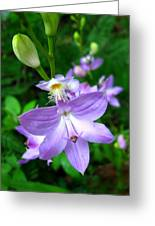 Grass Pink Orchid Greeting Card