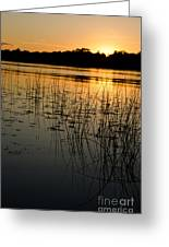Grass Reflection 2 Greeting Card
