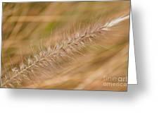 Grass Seed Head Greeting Card