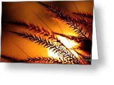 Grass Silhouette Against Sunset Greeting Card