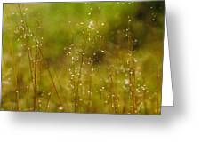 Grass Sparkles Greeting Card
