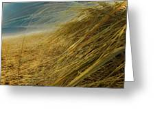 Grass To Sea Greeting Card