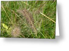 Grasses At Spaulding Pond Greeting Card