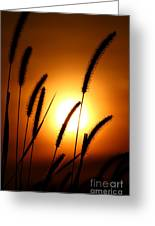 Grasses At Sunset - 1 Greeting Card