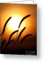 Grasses At Sunset - 2 Greeting Card