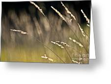 Grasses Blowing Greeting Card