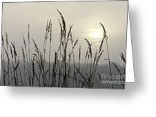 Grasses In Iceblue Landscape Greeting Card