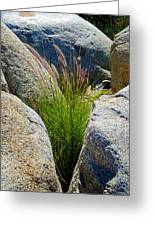 Grasses In Oasis On Borrego Palm Canyon Trail In Anza-borrego Desert Sp-ca Greeting Card