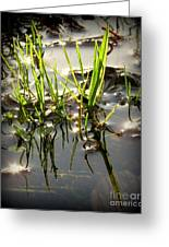 Grasses In Water Greeting Card