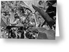 Grasshopper 2 Greeting Card